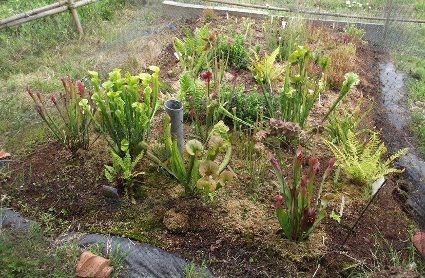 Tourbieres d 39 amateurs de plantes carnivores - Plante resistant au gel ...